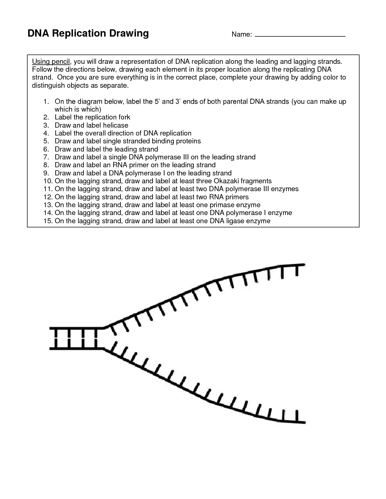 Dna replication worksheets middle school